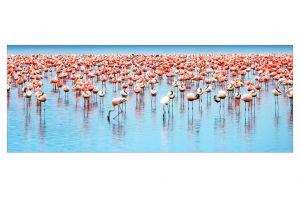 Стъклена картина Фламинго