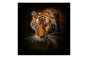 Стъклена картина Тигър