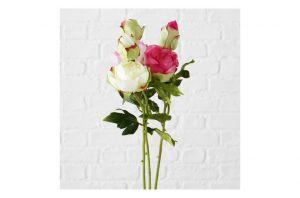 Декоративно цвете божур