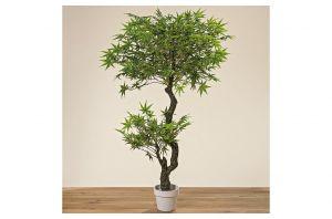 Декоративно кленово дърво