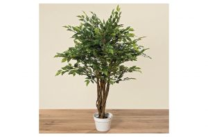 Декоративно дърво фикус