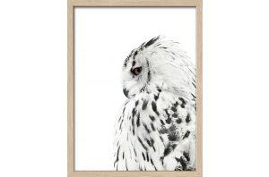 Картина Snow Owl