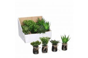 Декоративно растение, 4 вида