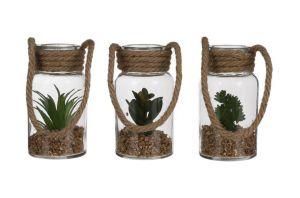 Декоративно растение в стъкло, 3 вида